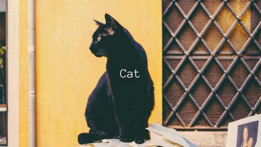 Catのサムネイル