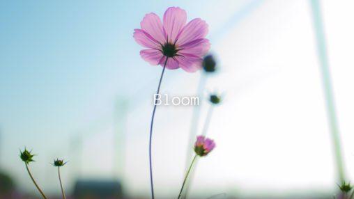 Bloomのサムネイル