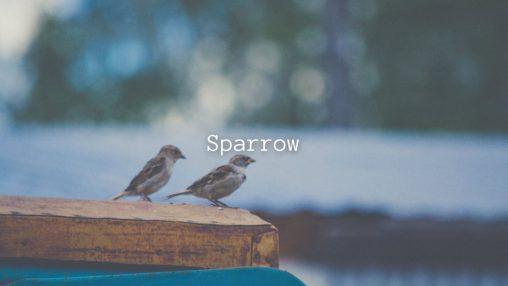 Sparrowのサムネイル