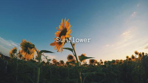 Sunflowerのジャケット